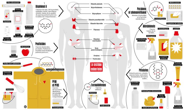 998013-les-perturbateurs-endocriniens-infographie-big