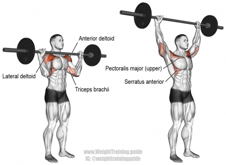 barbell-military-press-990x724.png
