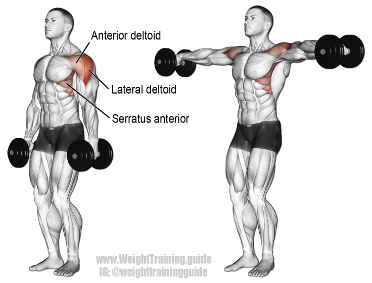 dumbbell-lateral-raise.png