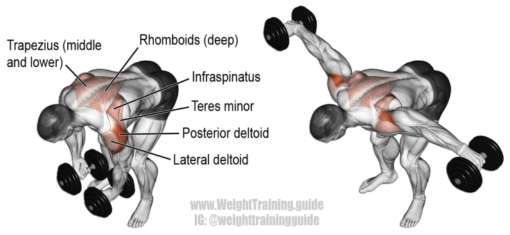 Dumbbell-Rear-Lateral-Raise.png