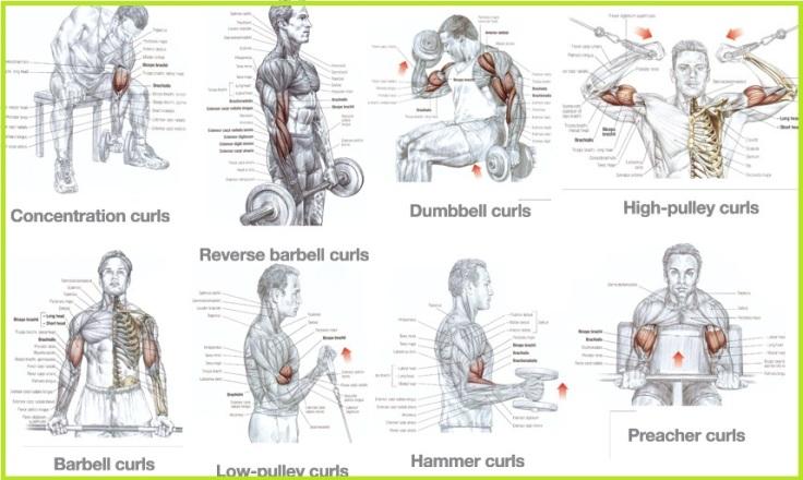 biceps-workouts.jpg