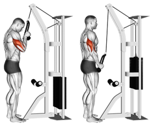 Standing+One+Arm+Tricep+Pushdowns+(Overhand+Grip)