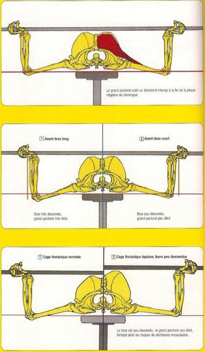 20121128-morphologie-developpe-couche.jpg