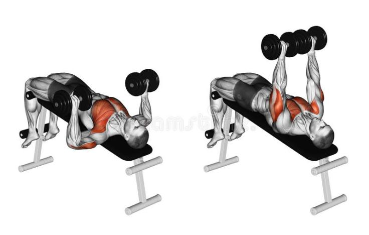 exercising-decline-dumbbell-bench-press-bodybuilding-target-muscles-marked-red-initial-final-steps-66935924